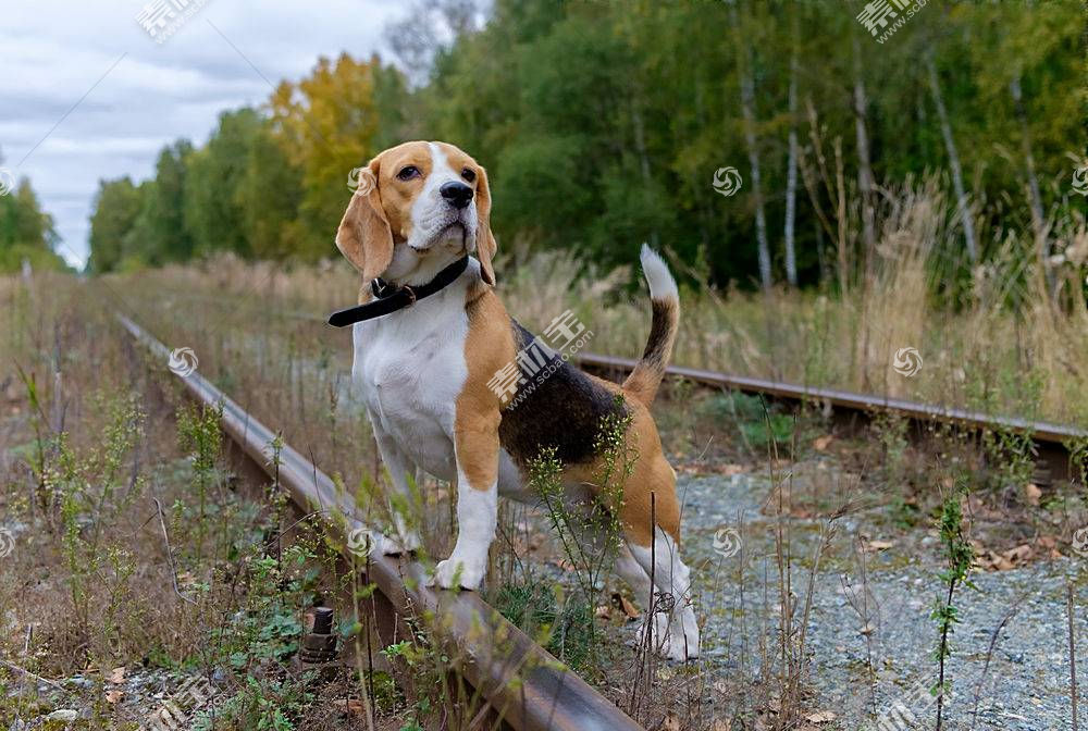 铁路,动物,狗612209