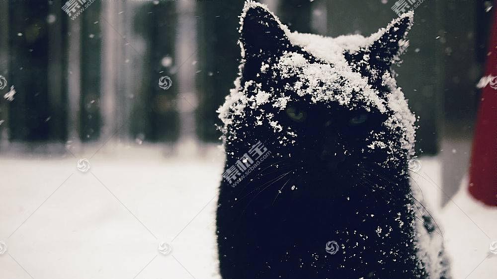 雪,雪花莲,猫,动物545060