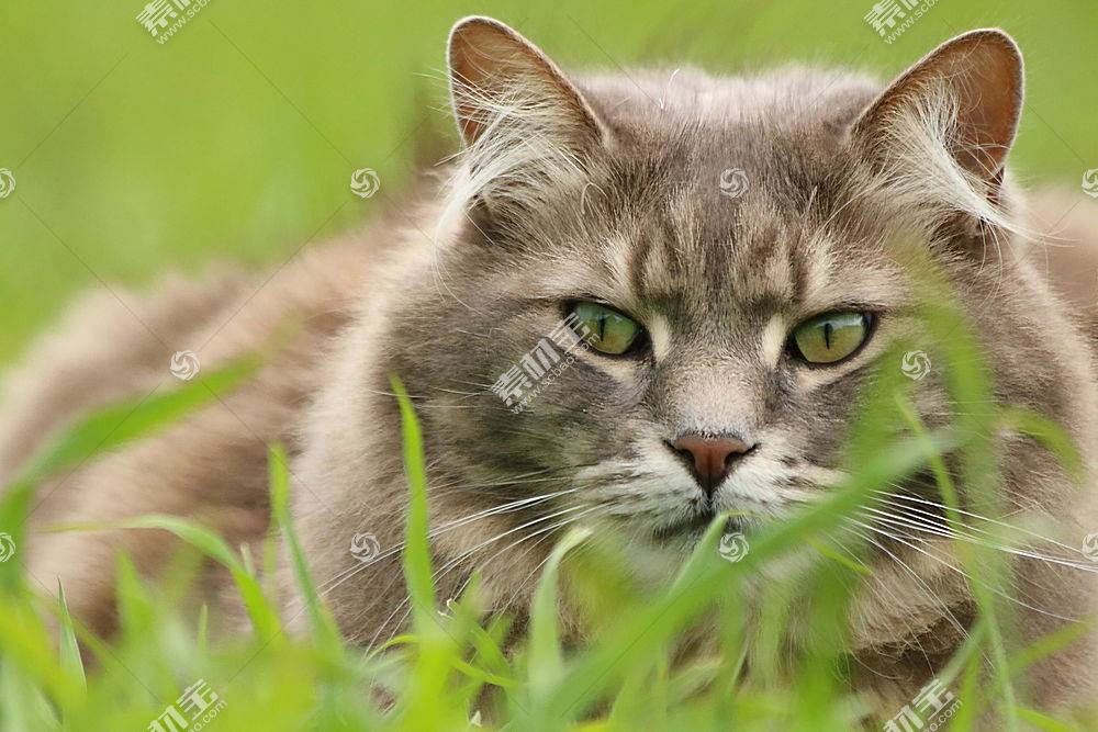 绿色,草,猫,眼睛,动物598772