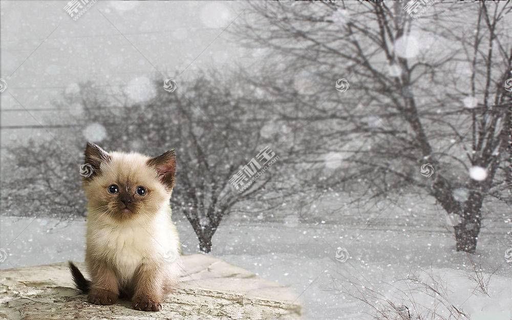 猫,动物,babuleh598131