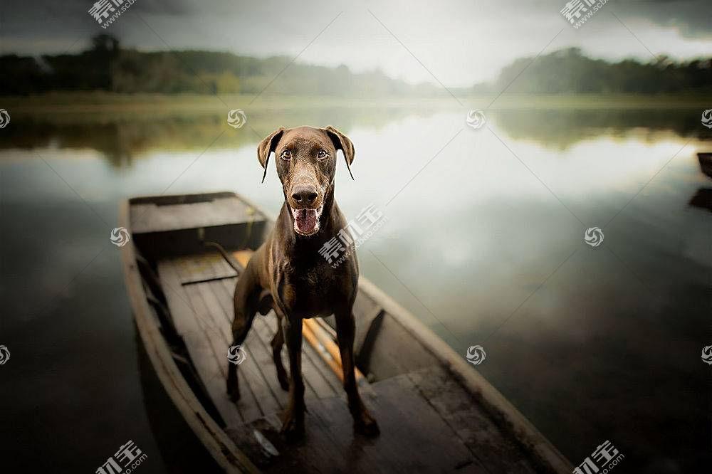 船,狗,动物671981