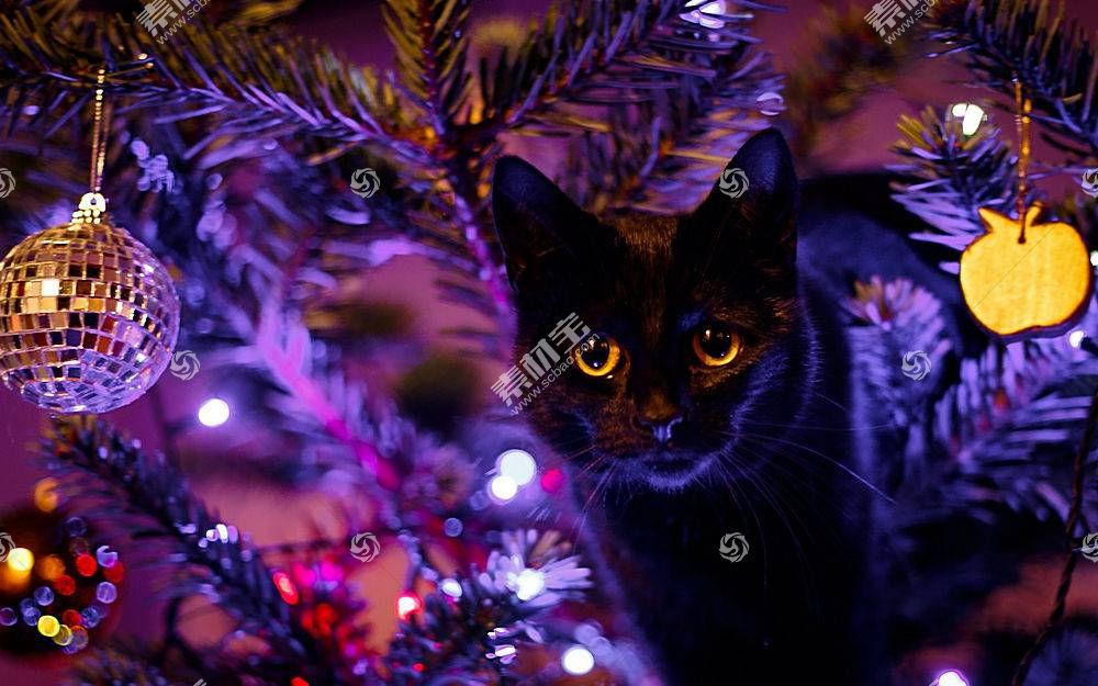 猫,动物,圣诞,圣诞饰品466517