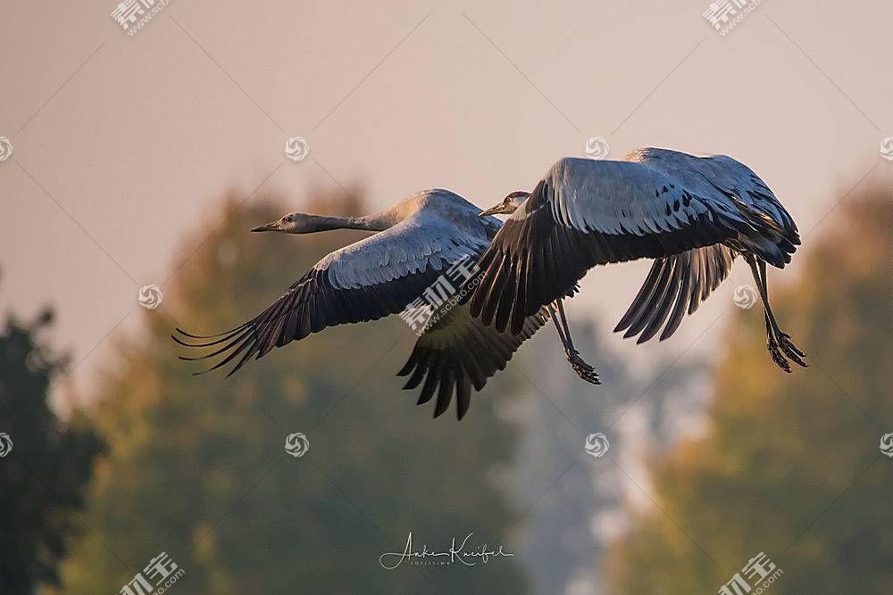 飞行,鸟类,性质,动物572399