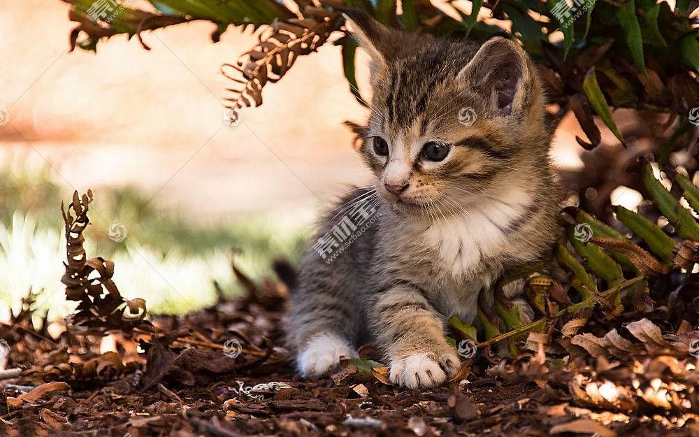 猫,动物,小猫621670