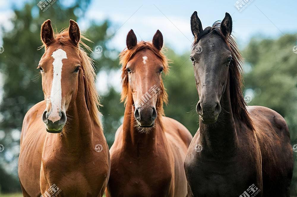 马,动物387372