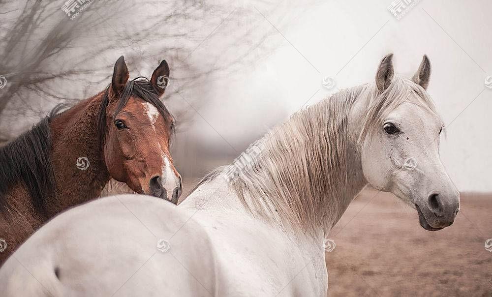 马,动物558031