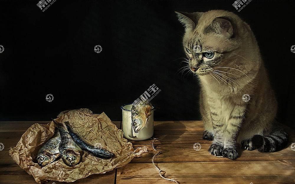 猫,动物,幽默500258