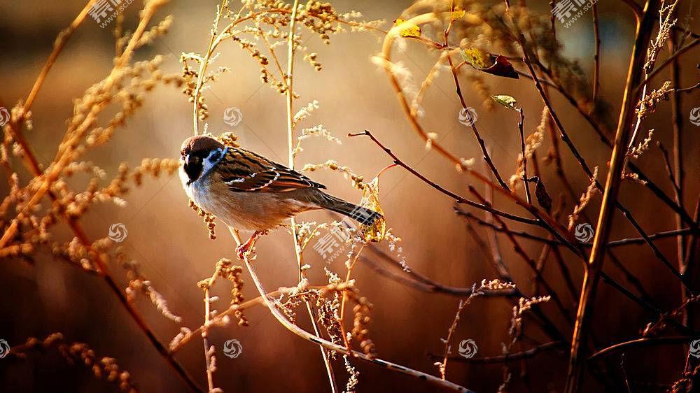 鸟类,性质,动物383524