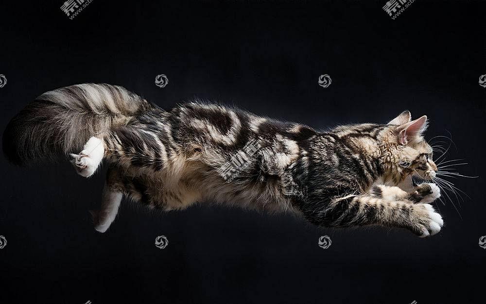 猫,动物,跳跃500255