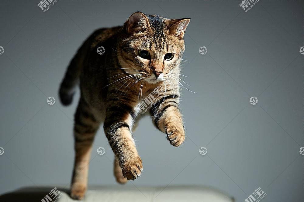 猫,动物,跳跃500256