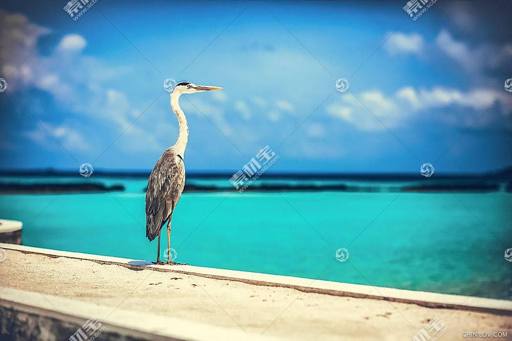 鸟类,海,蓝色,天空,动物,伊万吉尼洛夫592744