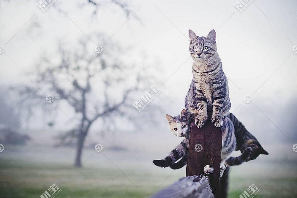猫,动物,性质526392