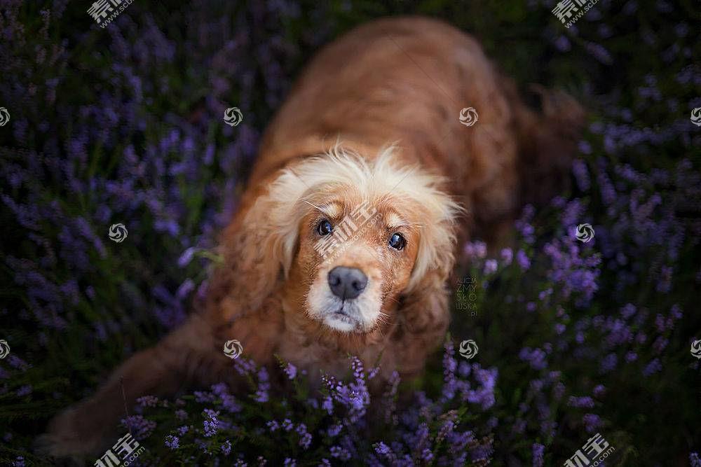 花卉,植物,动物,狗492182