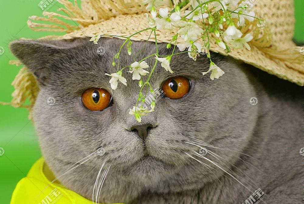 花卉,植物,猫,动物580870