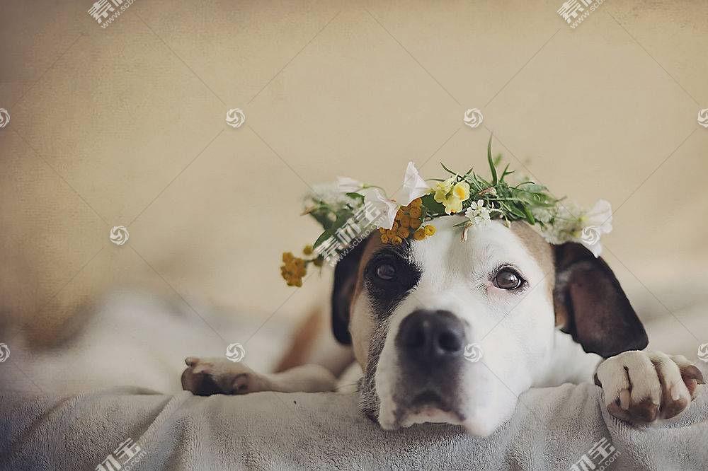 花卉,狗,动物557509