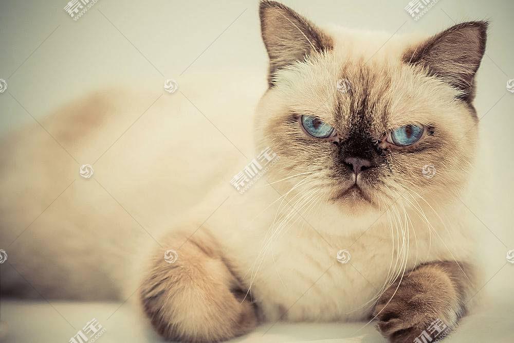 蓝眼睛,猫,动物548272