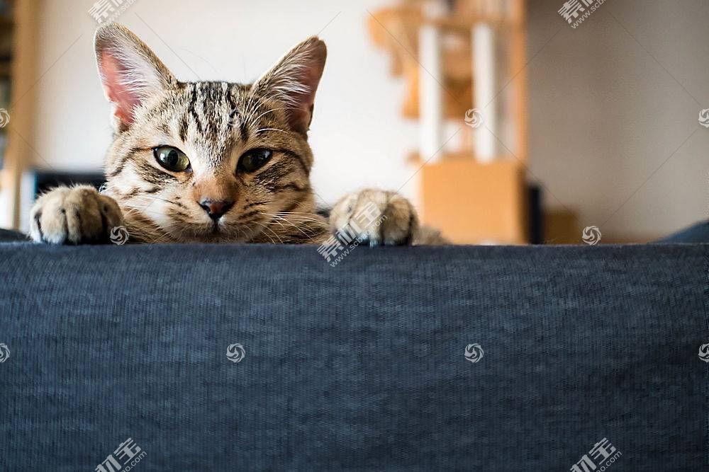 蓝色,房间,动物,猫554787