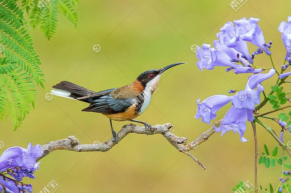鸟类,动物,植物455842