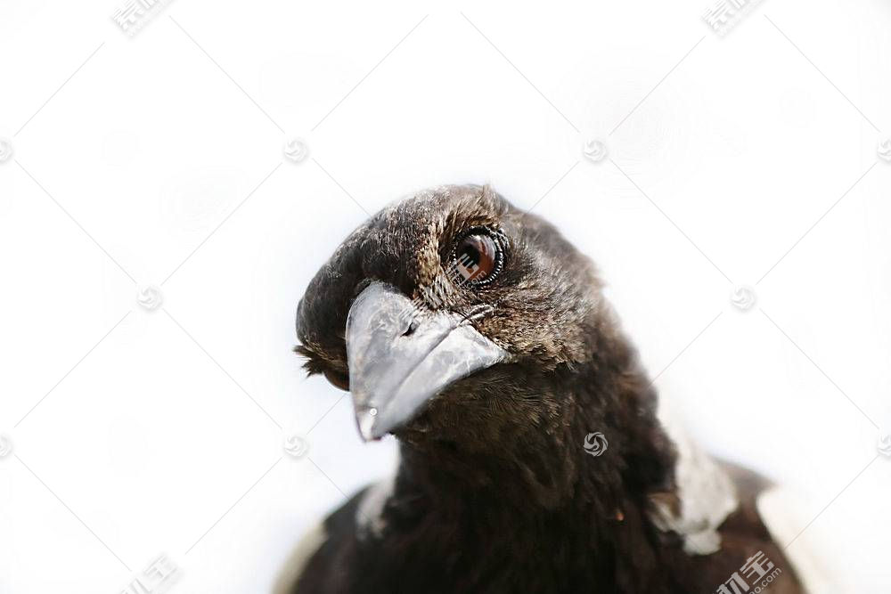 鸟类,动物,白色570509