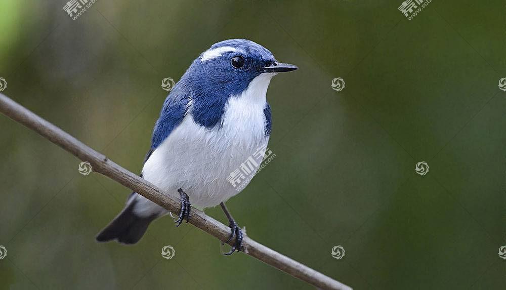 鸟类,动物,蓝色,群青蝇583728