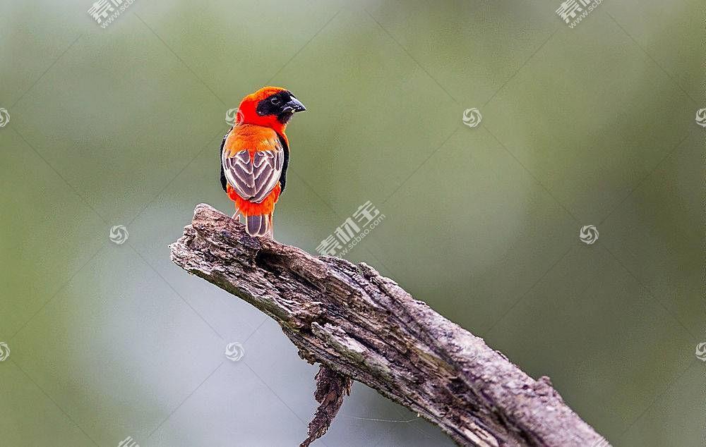 鸟类,动物374043