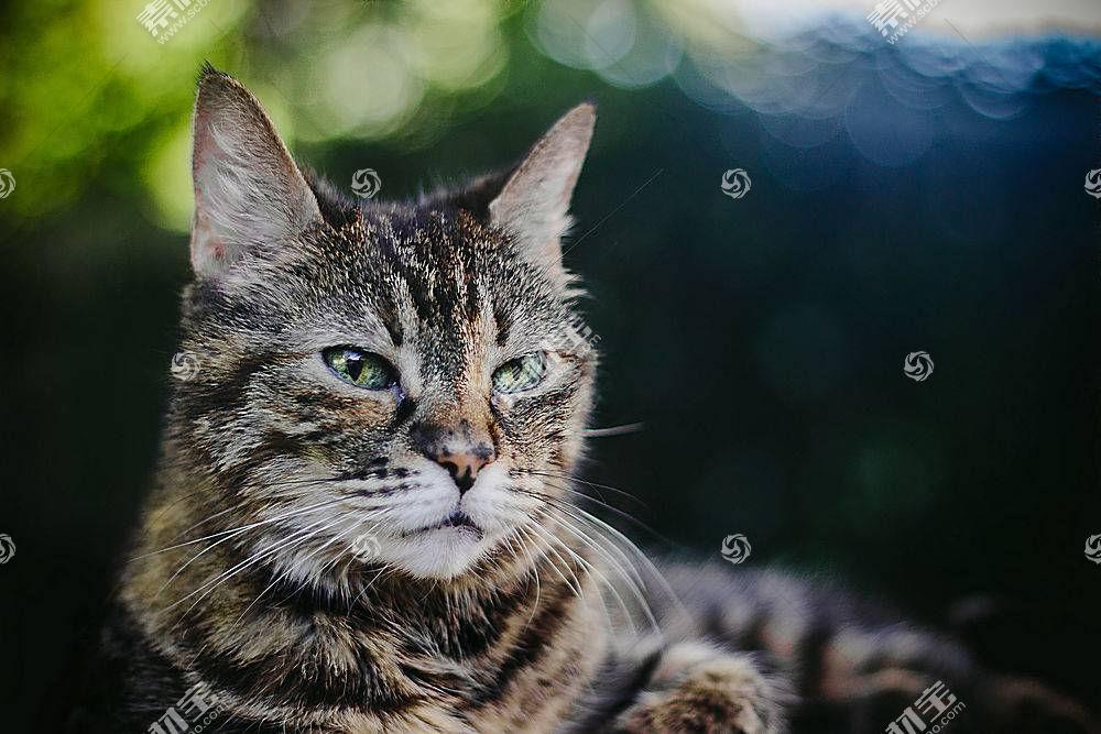 猫,动物,背景虚化,性质526393