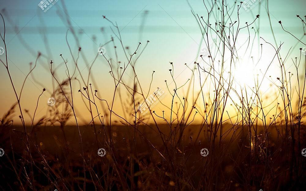 景深,植物369792图片