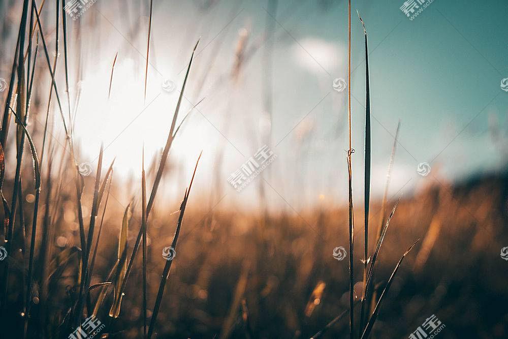 草,植物,壁纸,阳光609872图片