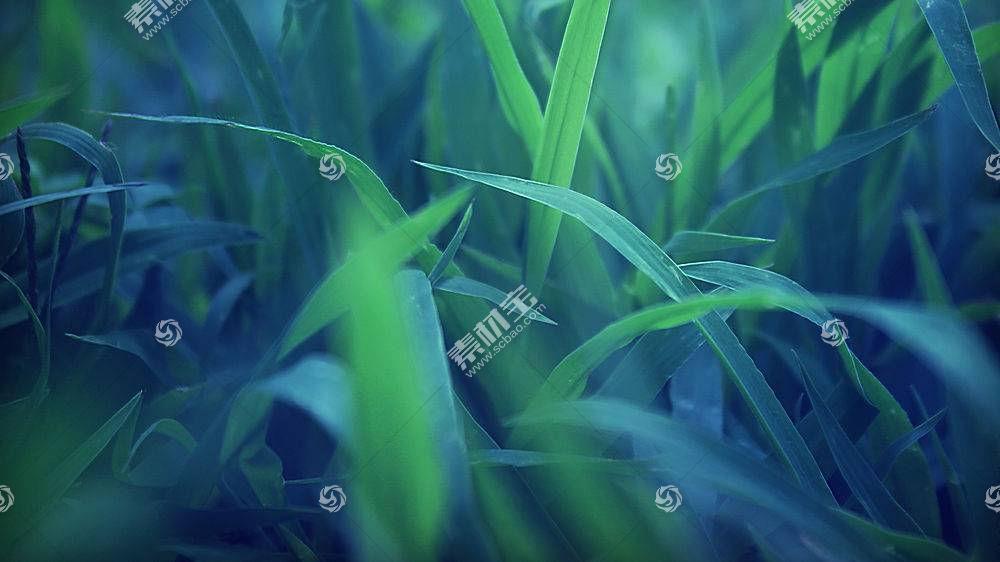 草,宏,植物183026图片