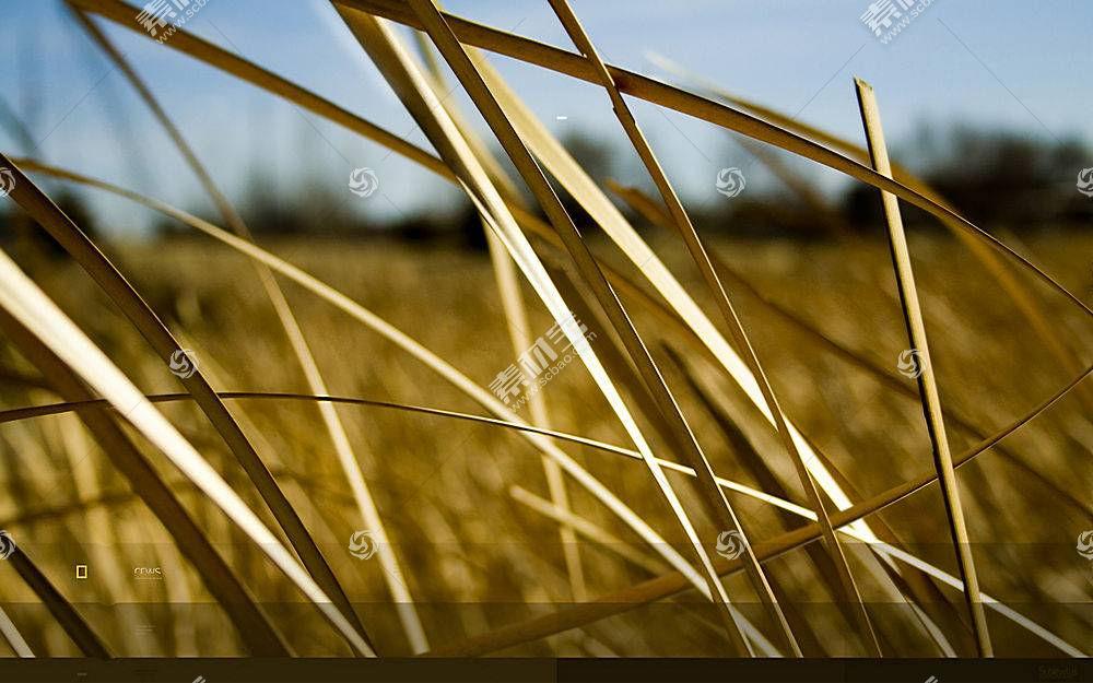草,数字艺术,壁纸,植物23706图片