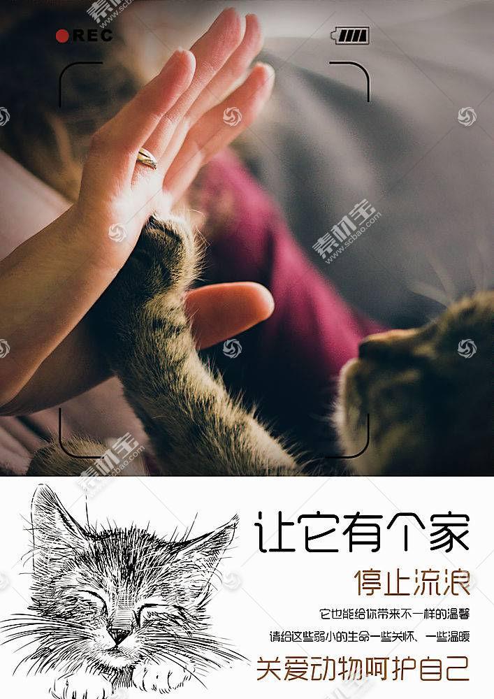 公益流浪猫海报模板