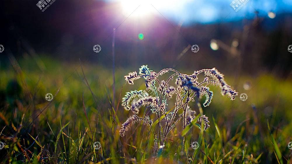 101963,地球,草,壁纸图片