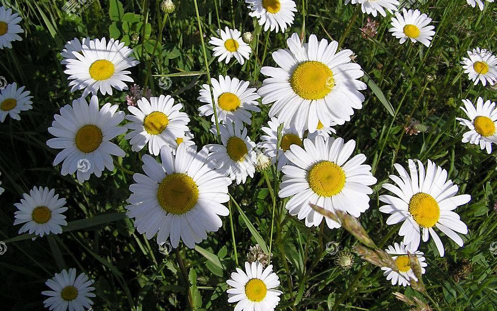 44352,地球,花,花,壁纸图片