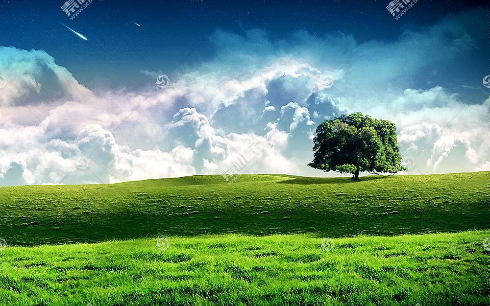 53387,地球,树,树,壁纸图片