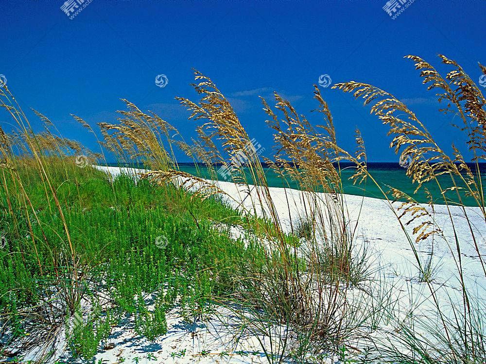 15415,地球,海滩,草,沙,海洋,壁纸图片