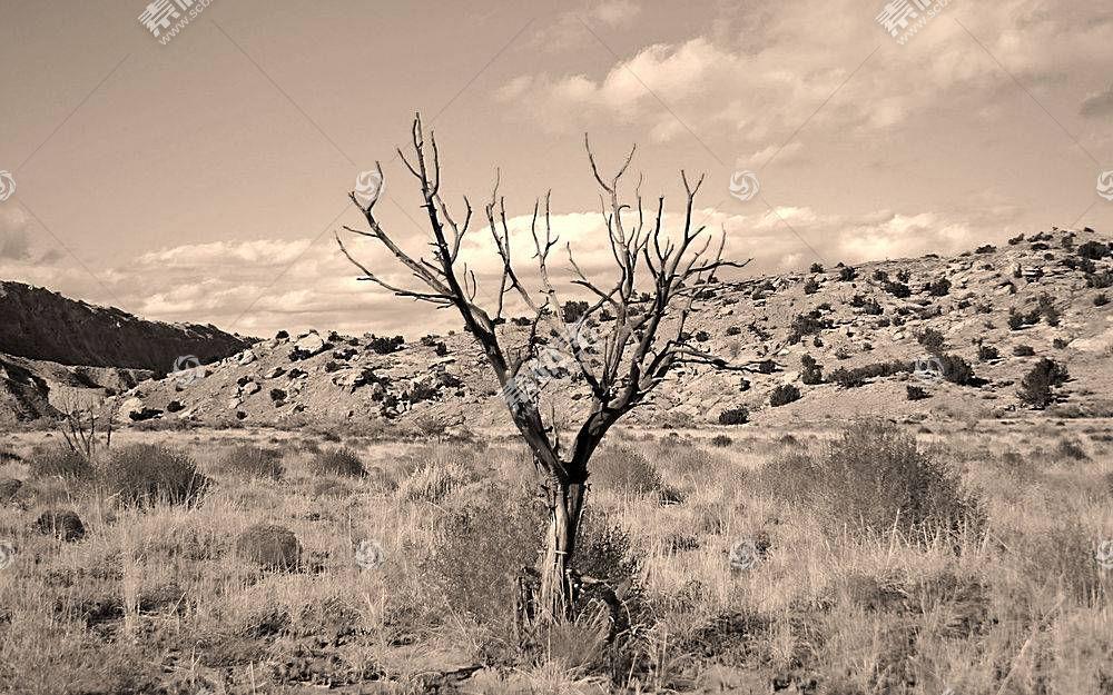 55215,地球,沙漠,树,壁纸图片