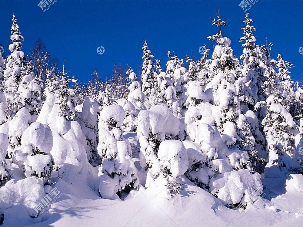 19793,地球,冬天的,树,雪,壁纸图片