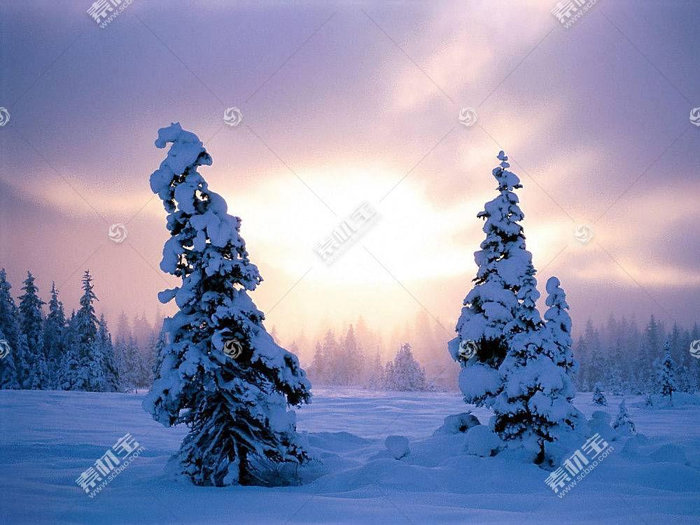 20335,地球,冬天的,雪,树,壁纸图片