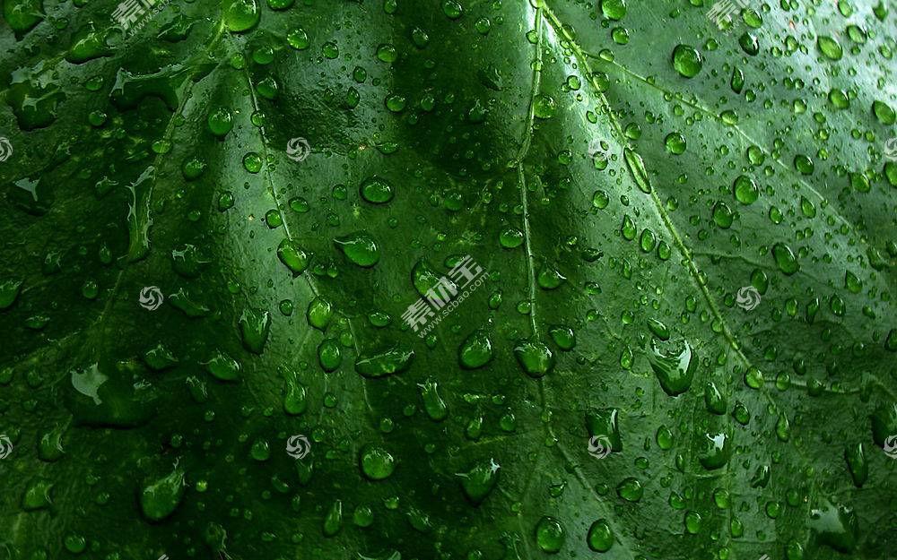 64299,地球,水,滴,雨点,植物,叶子,绿色的,自然,壁纸图片