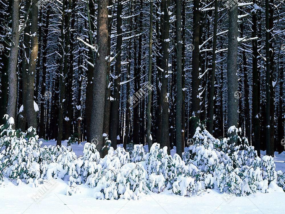 24565,地球,冬天的,壁纸图片