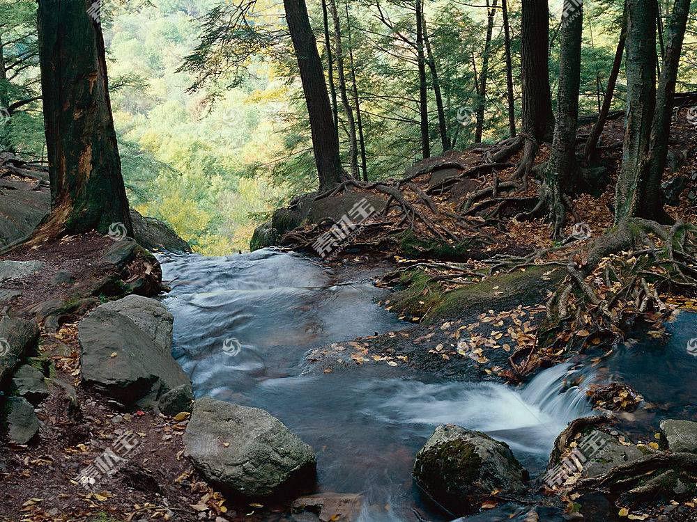 22549,地球,瀑布,瀑布,河,森林,壁纸图片