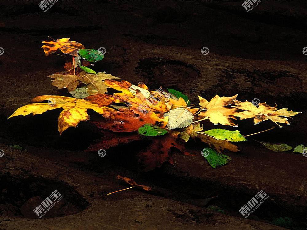 22557,地球,叶子,水,壁纸图片