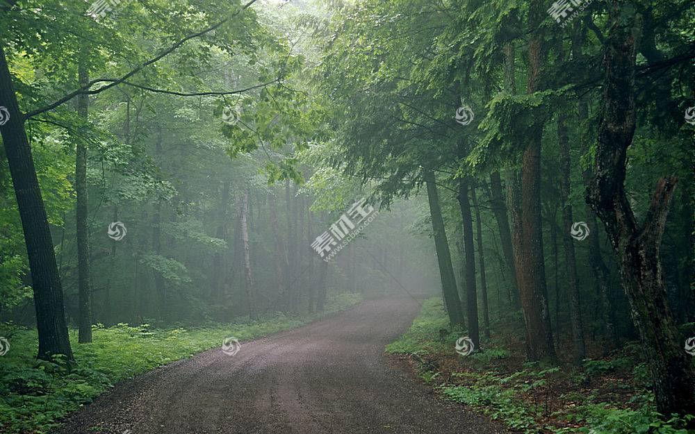 62353,地球,森林,壁纸图片