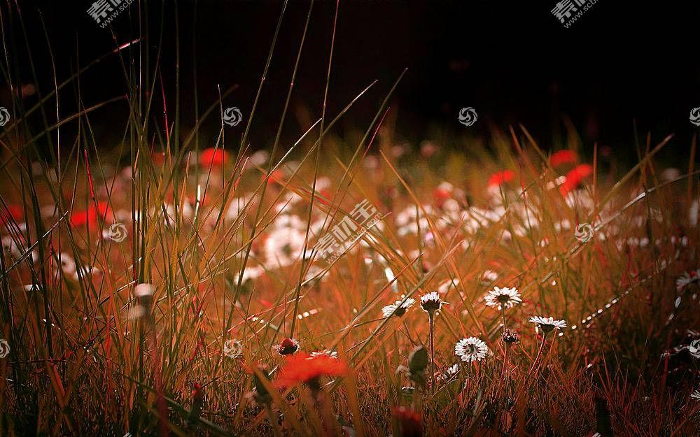 62477,地球,花,花,壁纸图片