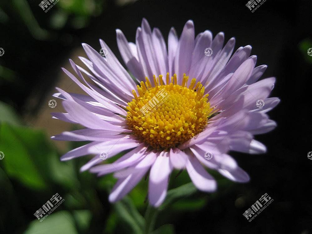 62484,地球,花,花,壁纸图片