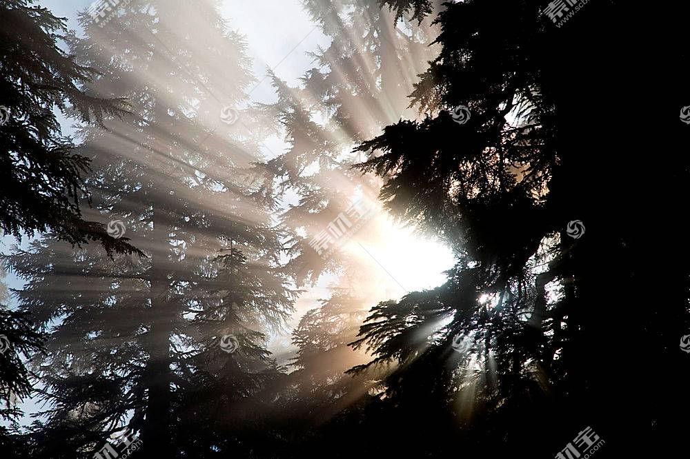 63080,地球,风景优美的,森林,树,阳光,壁纸图片