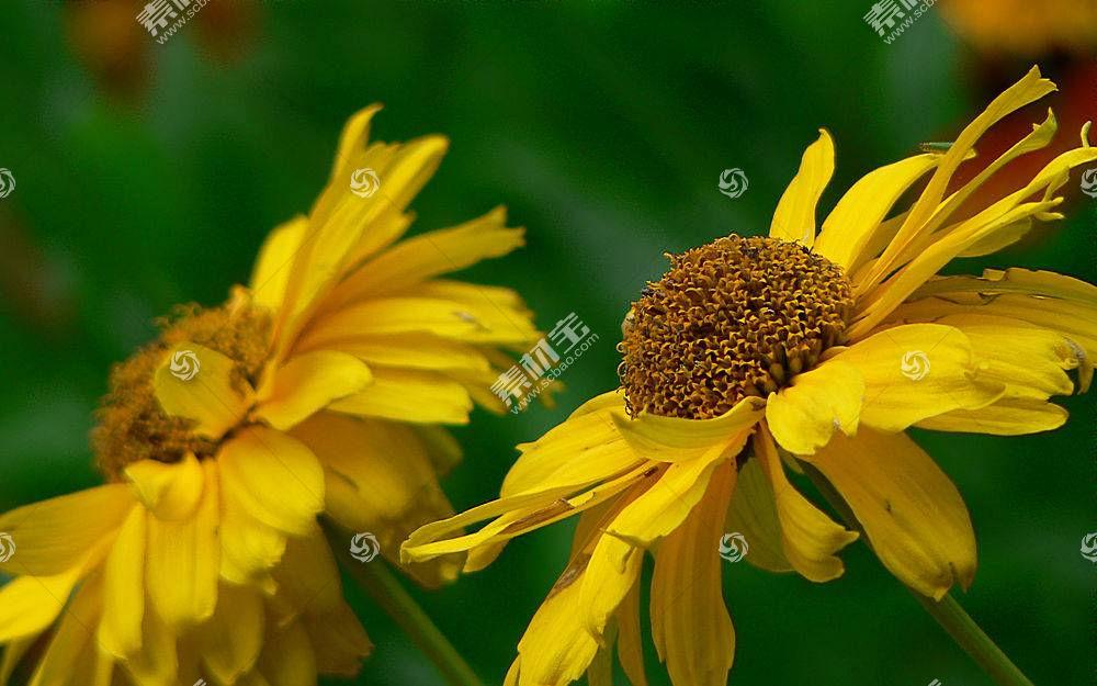 26222,地球,花,花,壁纸图片