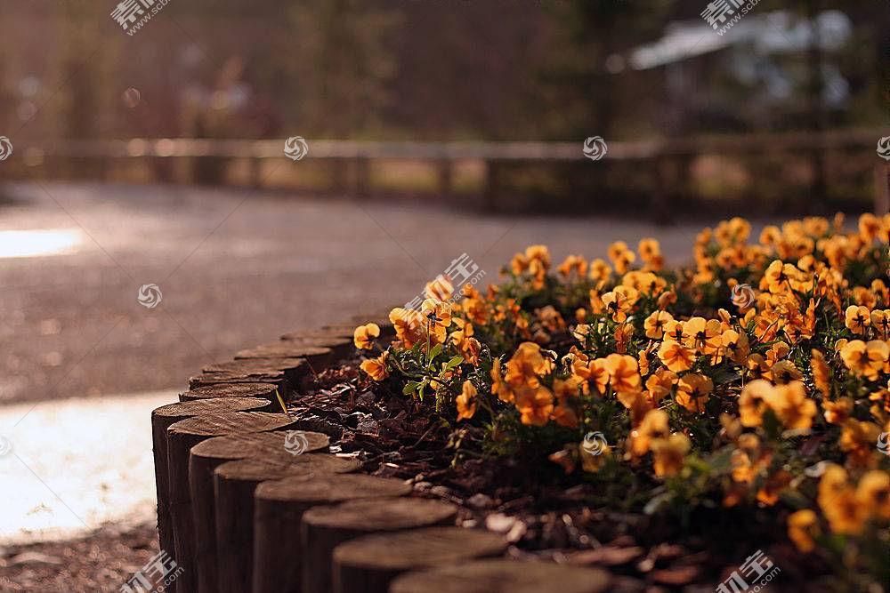 65294,地球,花,花,壁纸图片