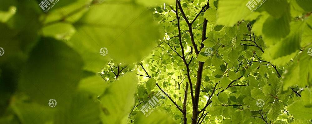 30766,地球,叶子,树枝,树,壁纸图片