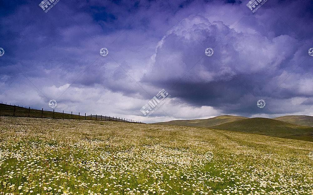 87502,地球,风景,草,花,天空,领域,壁纸
